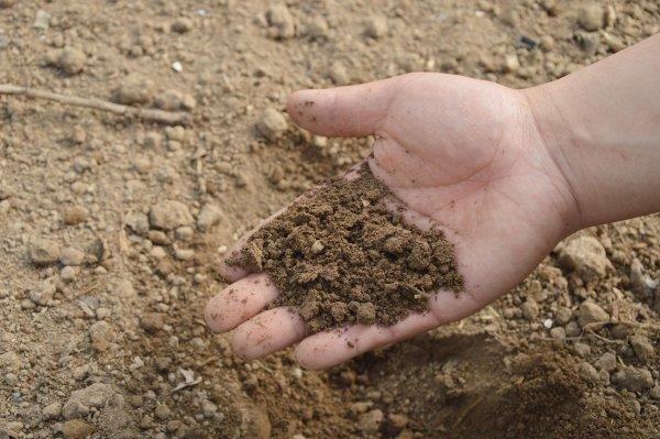 Eine Hand voll Erde
